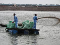 Hoàng Long Seafood: độc đáo cá tra vùng